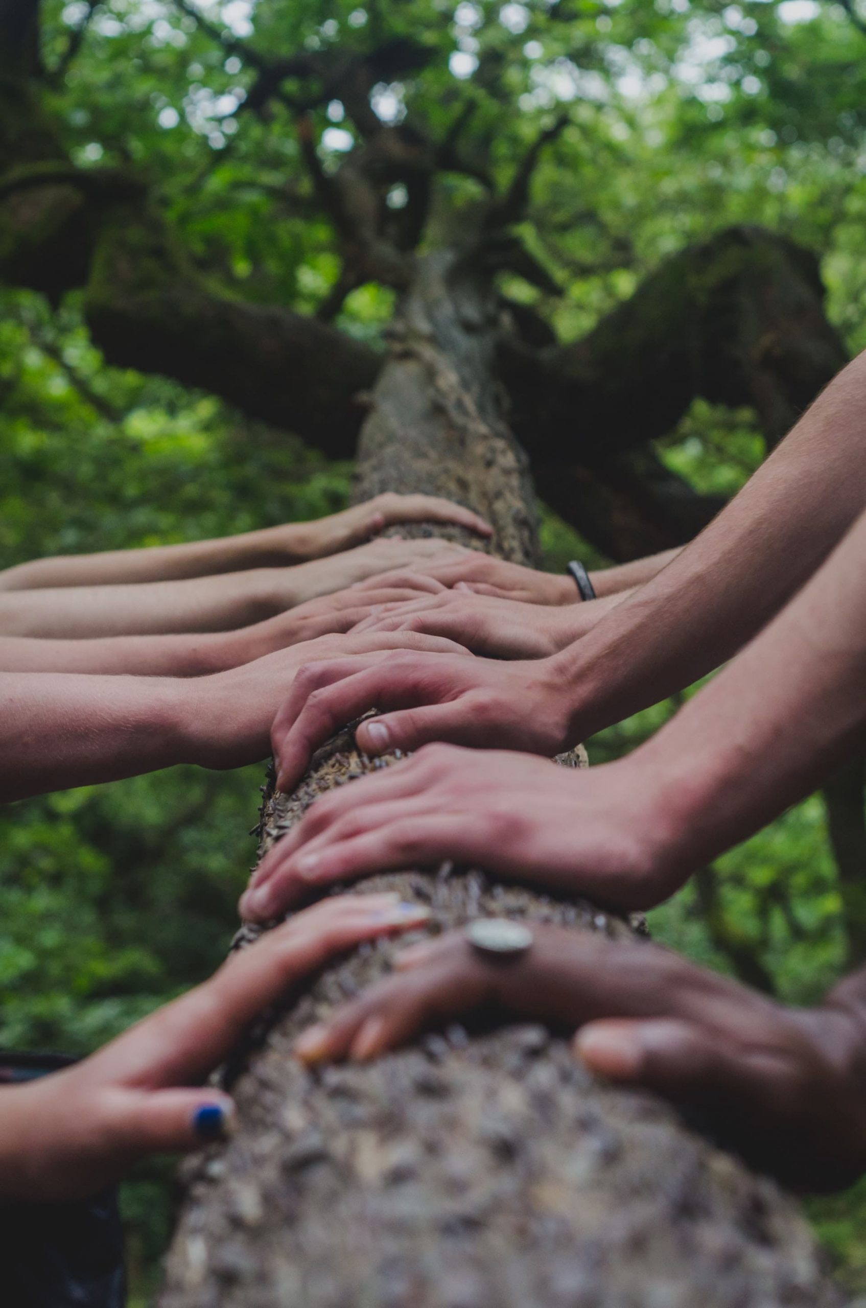 Hands on a tree branch.